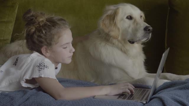 vídeos y material grabado en eventos de stock de girl using laptop while lying by golden retriever on sofa - tumbado boca abajo