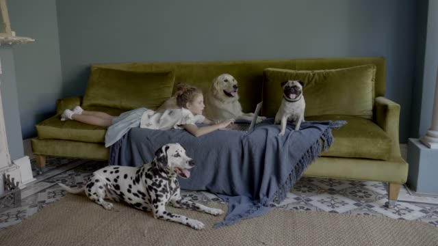 girl using laptop while lying on sofa by dogs - bedclothes stock videos & royalty-free footage