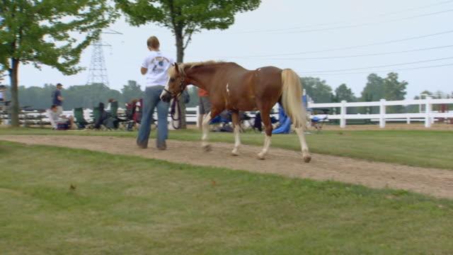 stockvideo's en b-roll-footage met girl walking a horse alongside a track - tuinhek