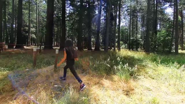 girl walking through pine and redwood woodland - pine woodland stock videos & royalty-free footage