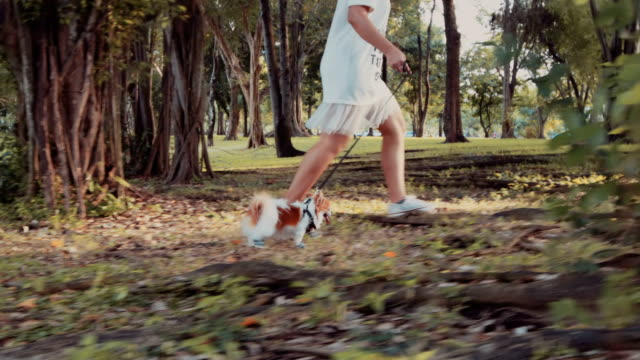 girl walking with chihuahua dog - dog walker stock videos and b-roll footage