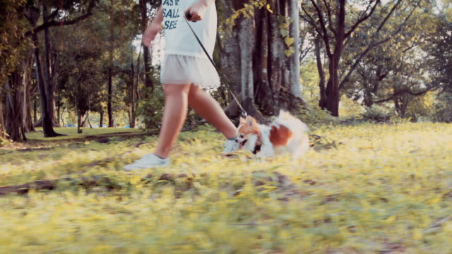 girl walking with her chihuahua dog - dog walker stock videos and b-roll footage