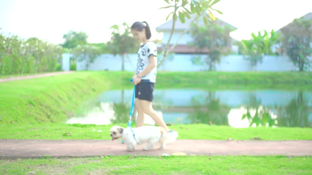 a girl walking with the dog on the walkway in the park. - lead stock videos and b-roll footage