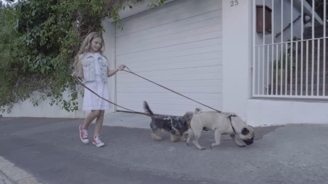 Girl walking with Yorkshire Terrier and pug on sidewalk