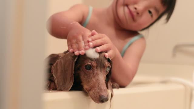 vídeos de stock, filmes e b-roll de garota lavando cachorro no banheiro - domestic bathroom