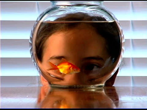 girl watching goldfish swimming in fishbowl - bowl stock videos and b-roll footage