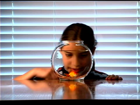 girl watching goldfish swimming in fishbowl - fishbowl stock videos and b-roll footage