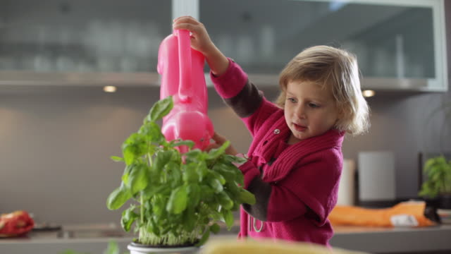 MS Girl (2-3) watering potted basil plant in kitchen / Kleinmachnow, Brandenburg, Germany