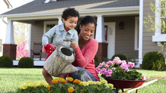 vidéos et rushes de ds ws girl waters flowers in garden with mother in front of house/ richmond, virginia usa - plante