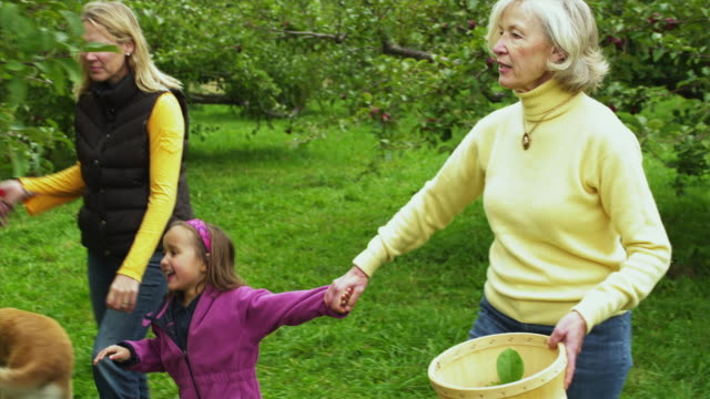MS PAN SHAKY Girl (4-5) with mother and grandmother picking apples in orchard, Manchester, Vermont, USA