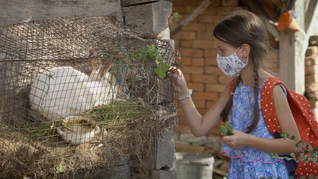 保護フェイスマスクを持つ女の子は農場でウサギの農場の動物をパッティング - 厩舎点の映像素材/bロール