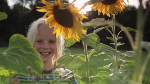 girl with sunflowers - blondes haar stock-videos und b-roll-filmmaterial