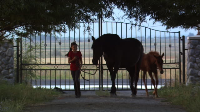 girl with two horses - see other clips from this shoot 1139 stock videos & royalty-free footage