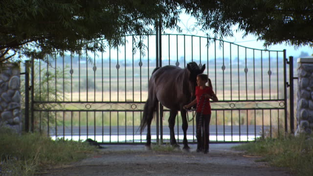 girl with two horses - altri spezzoni di questa ripresa 1139 video stock e b–roll