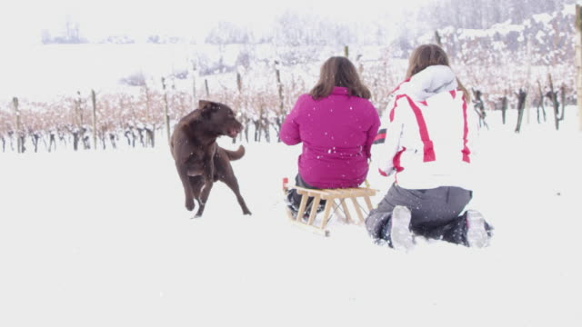 4K Girls and dog playing, sledding in snowy vineyard, slow motion