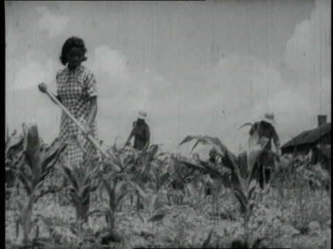 vidéos et rushes de 1940 ms girls and men working a farm field / united states - 1940