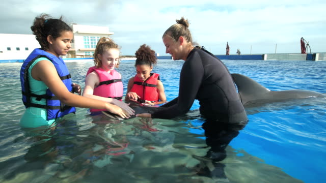 girls and trainer in water petting dolphin - waist deep in water stock videos & royalty-free footage