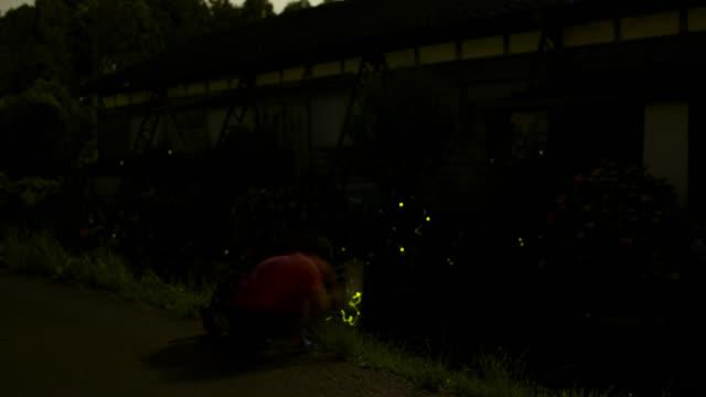 girls catch fireflies, japan. - 蛍点の映像素材/bロール
