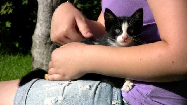 girl's hand holding a tiny kitten - small stock videos & royalty-free footage