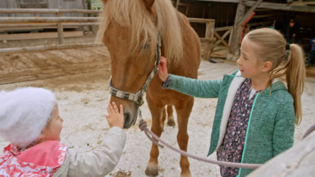 vídeos de stock, filmes e b-roll de meninas, acariciando um cavalo preso no rancho - cavalgar