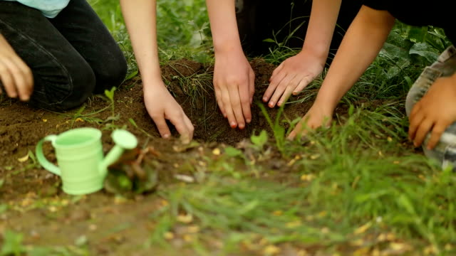 girls planted a sapling - reforestation stock videos and b-roll footage