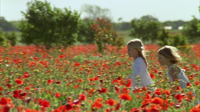 vídeos de stock, filmes e b-roll de ms pan girls (4-7) playing in field of wild poppies / fredericksburg, texas, usa  - menos de 10 segundos