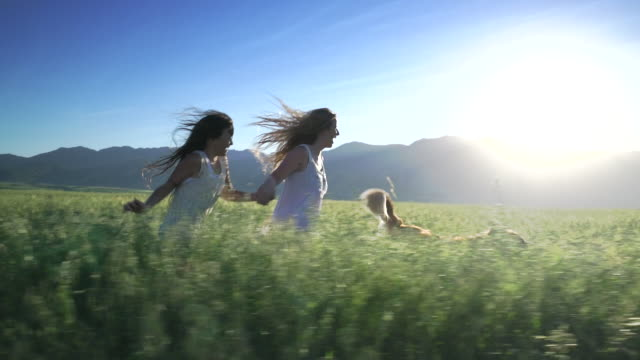 stockvideo's en b-roll-footage met ws ts sm girls running with their dog through a field - dog run