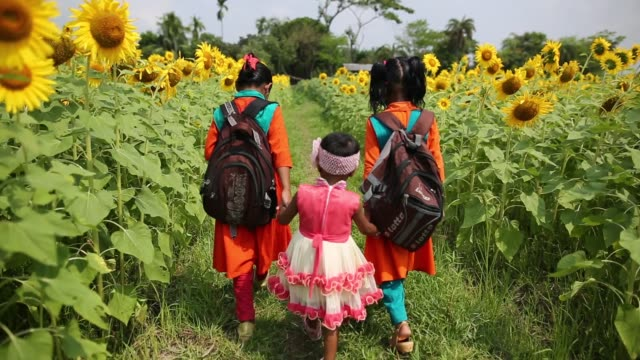 stockvideo's en b-roll-footage met girls seen going to school through the way sunflower garden in bangladesh. sunflower production in the changing climate at coastal areas of... - zonnebloem