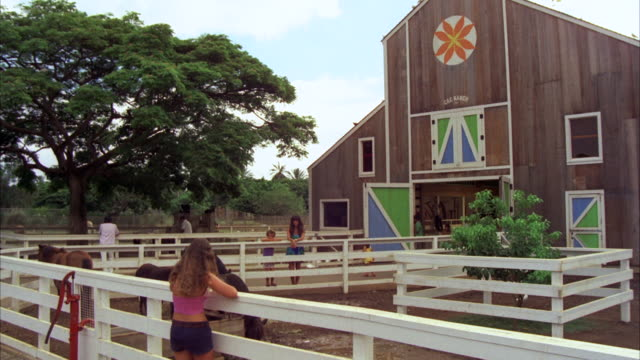 vídeos de stock e filmes b-roll de ms girls watching running horses in corral  - só meninas adolescentes