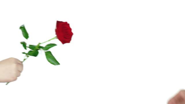 vídeos y material grabado en eventos de stock de hd: dar un rosas rojas - una rosa