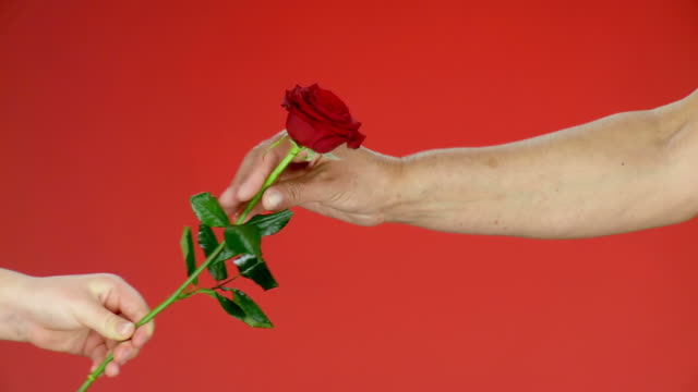 stockvideo's en b-roll-footage met hd: giving a red rose - giving