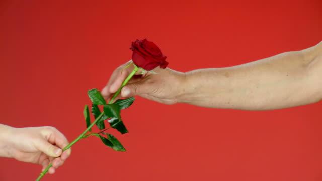 hd: giving a red rose - ge bildbanksvideor och videomaterial från bakom kulisserna