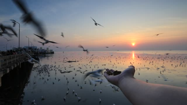 Giving food to flying seagull by hand, Thailand