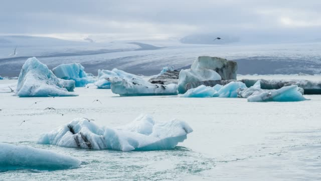 glacial lake with icebergs, birds overflying - flock of birds stock videos & royalty-free footage