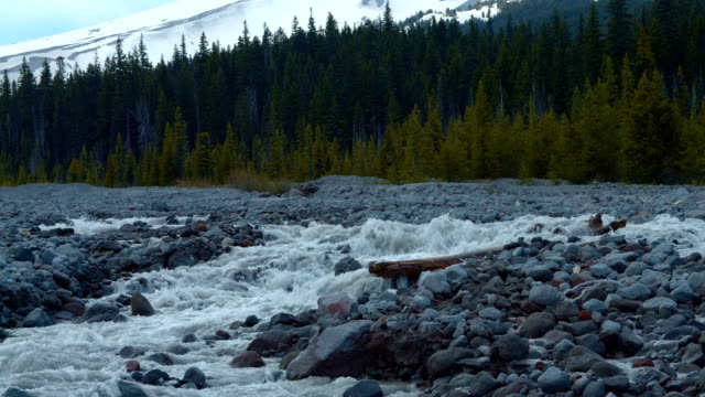 stockvideo's en b-roll-footage met glacial spring snowmelt stream white river in front of forest and mountain 1 mt. hood spring forest oregon cascade mountains - pacific crest trail