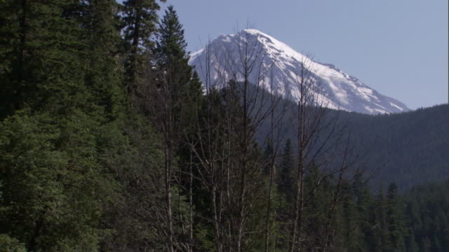 a glacial stream flows through a forest below snow-covered mount rainier. - mt rainier national park stock videos & royalty-free footage