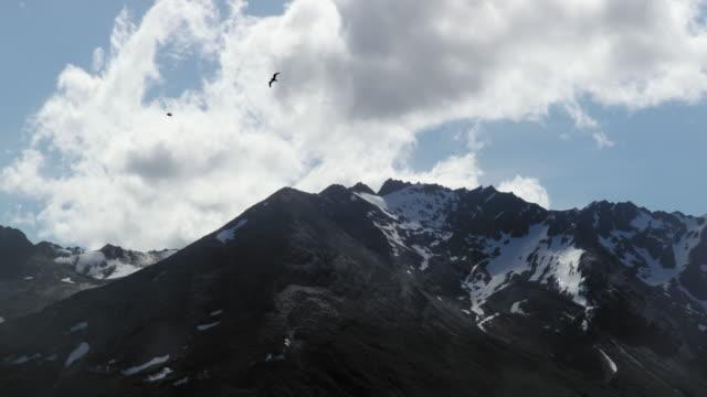 glacier ally - kleine gruppe von tieren stock-videos und b-roll-filmmaterial