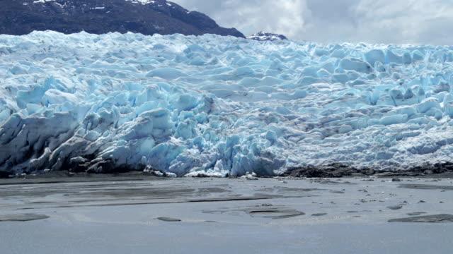 vídeos y material grabado en eventos de stock de glacier at the coast, antarctica - nariz de animal