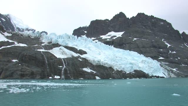 ms, glacier entering bay, south georgia island, falkland islands, british overseas territory - south georgia island stock videos & royalty-free footage