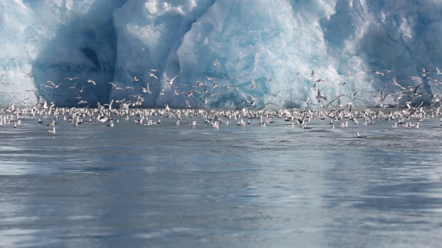 glacier with birds - svalbard islands stock videos & royalty-free footage