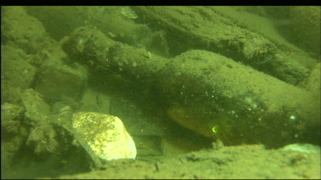 a glass bottle rests among the sunken wreckage of the steamer portland. - material stock videos & royalty-free footage