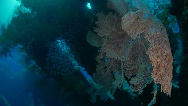 グラスフィッシュと海の大ファンコーラル、usat (4k)の難破船 - ゴーゴニアンコーラル点の映像素材/bロール