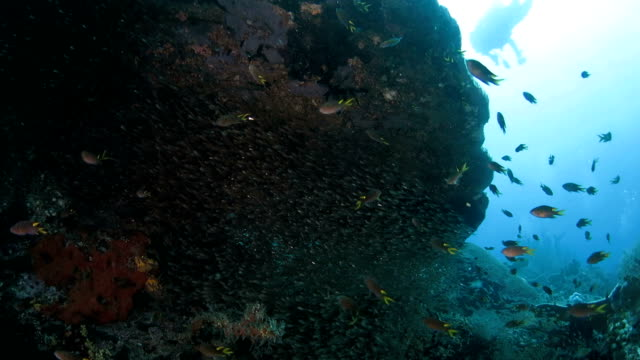 glass fish and coral reef - glass fish stock videos & royalty-free footage