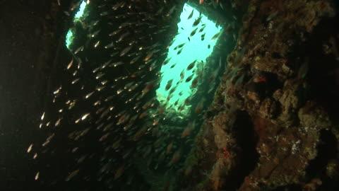 glass fish inside kasi maru (or kashi maru) ship wreck. mbaeroko bay, near munda, solomon islands, melanesia - wrack stock-videos und b-roll-filmmaterial