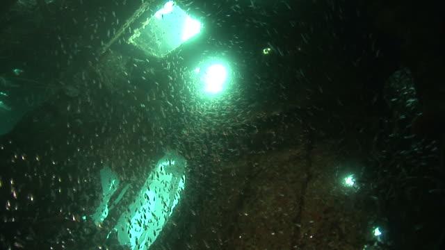 glass fish inside kasi maru (or kashi maru) ship wreck. mbaeroko bay, near munda, solomon islands, melanesia - glass fish stock videos & royalty-free footage