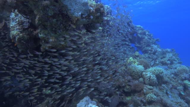 glass fish - グラスフィッシュ点の映像素材/bロール