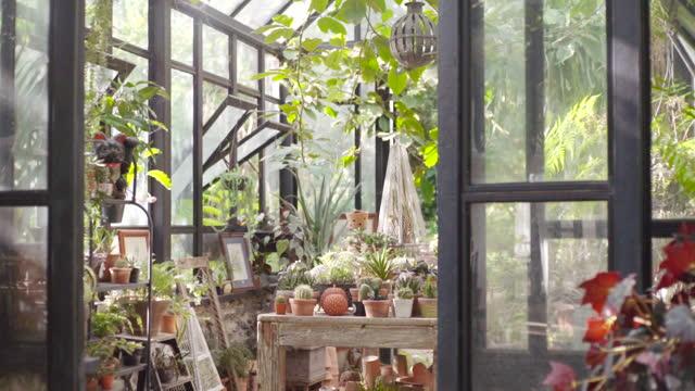 vidéos et rushes de serre ms glass en été - jardin classique