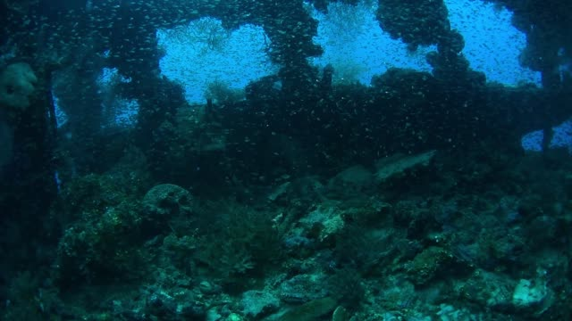 glassfish and telegraph on shinkoku maru, underwater wrecks, truk lagoon, chuuk micronesia - 1944 stock videos & royalty-free footage