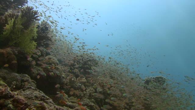 glassfish - グラスフィッシュ点の映像素材/bロール