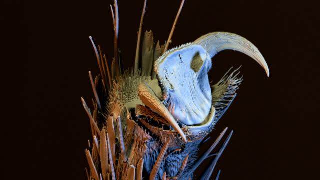 """glasswing butterfly claw, sem"" - micrografia elettronica a scansione video stock e b–roll"